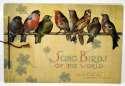 1888 Allen & Ginter Album  Song Birds of the World VG-Ex